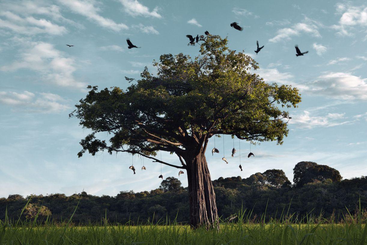 Na fotografia 'Campo de espera', feita no arquipélago do Rio Negro, o artista intervém na paisagem original
