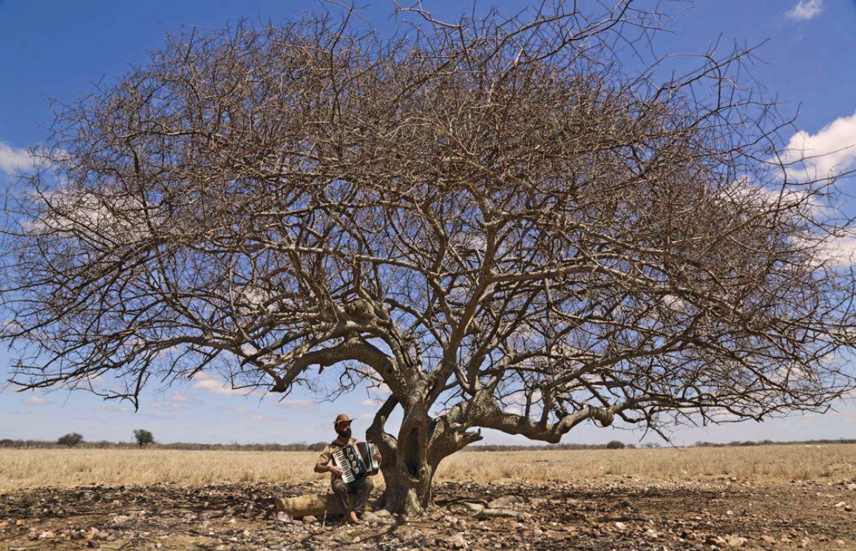 O chão rachado, as árvores secas e o horizonte têm papel central na trama