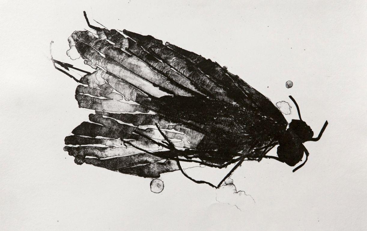 A litografia é um modo de reprodução de imagem desencadeado pela repulsão entre água e gordura