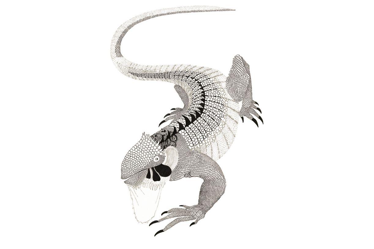 O sinimbu, espécie de iguana, é uma das ilustrações presentes no livro (1961, nanquim,  50 x 35 cm)