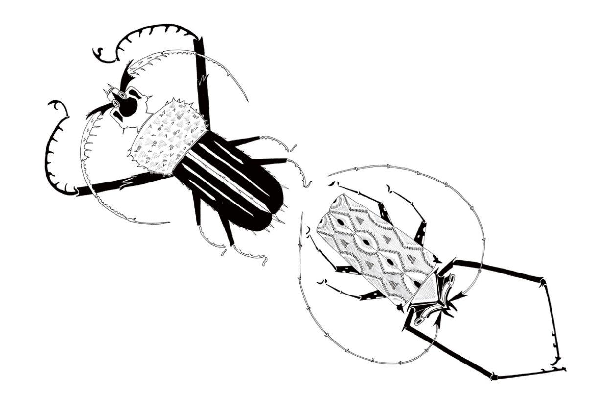 Besouros, de ilustração presente no livro 'Terra papagalorum' (2019)