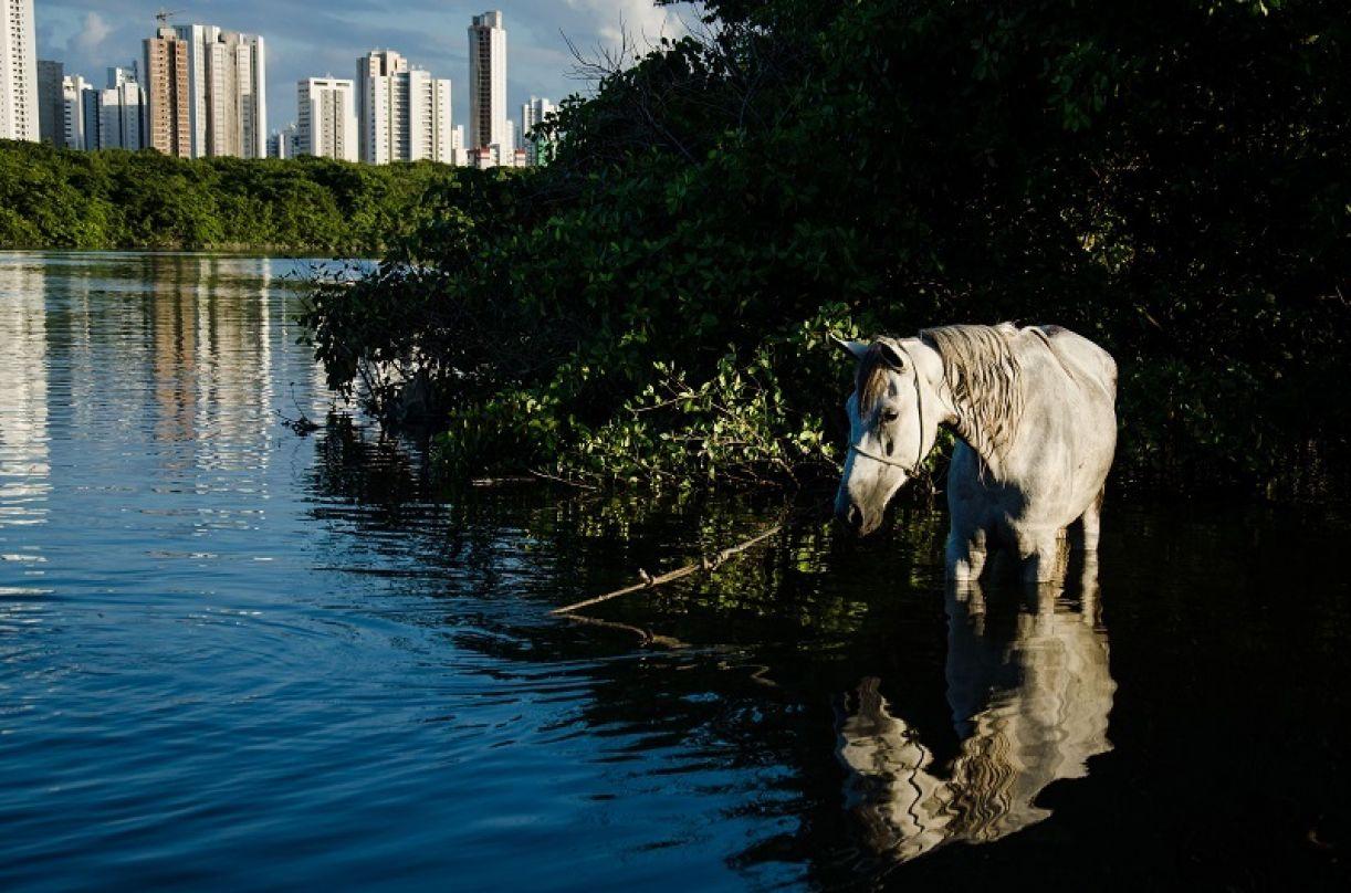 Fotografia 'Ghost Horse ou Meu cavalo só falava inglês'