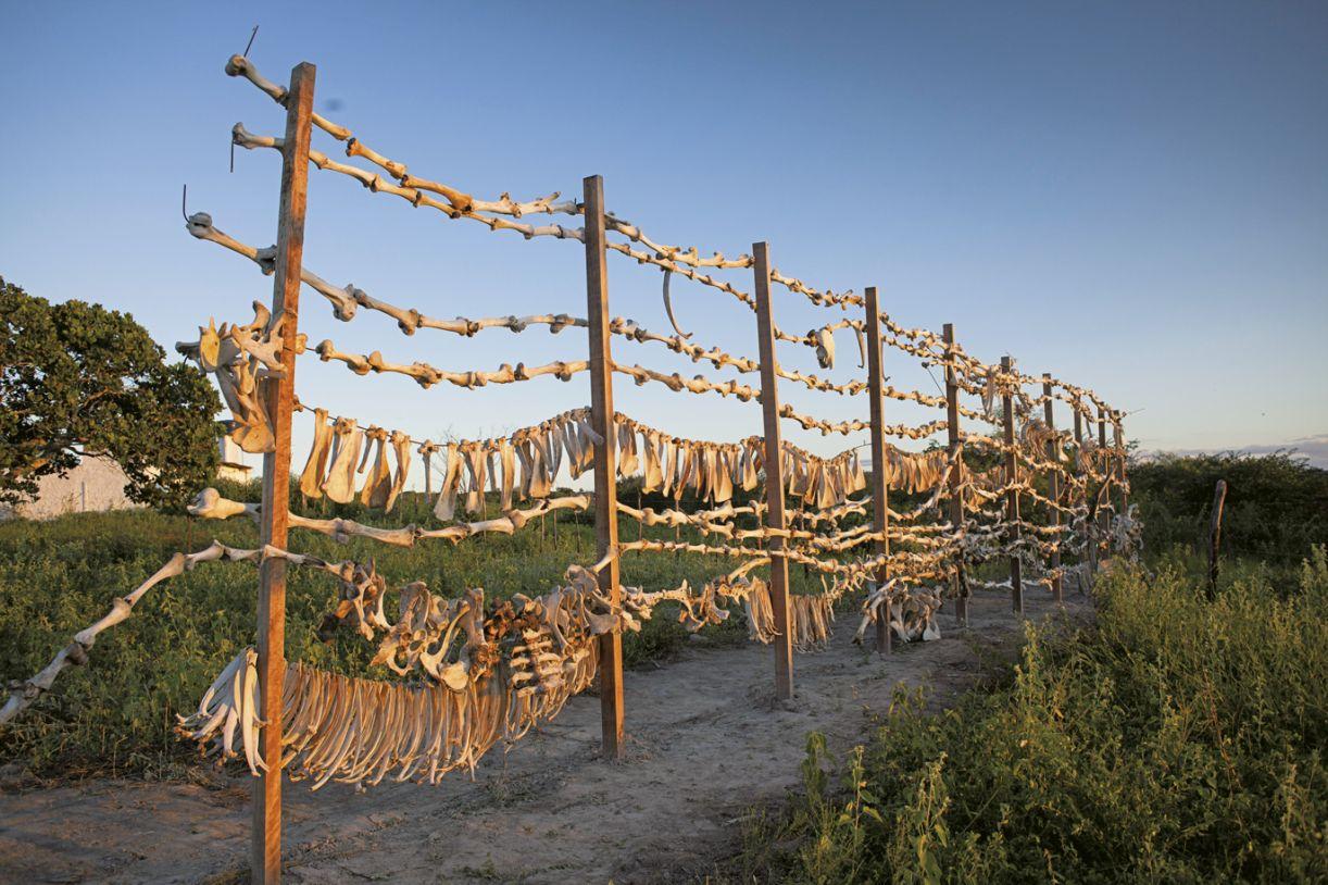 Durante a Residência Belojardim, Carlos Mélo produziu uma escultura de ossos bovinos que questiona a demarcação de território quilombola