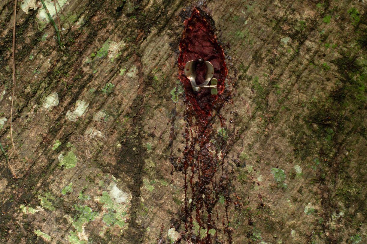 Juliana Notari utiliza-se do seu próprio sangue colocado em árvore para ilustrar fecundidade