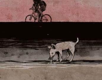 O cão sem plumas