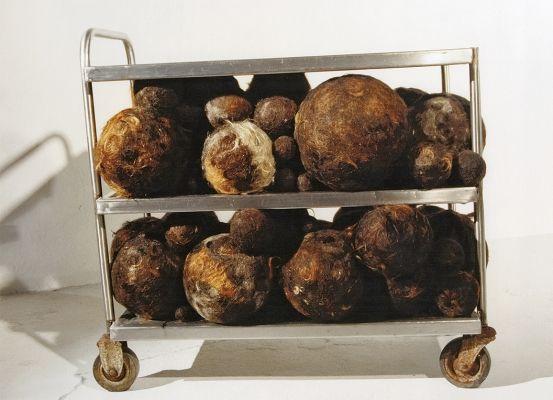 'Sem título (3)', objetos, 2001