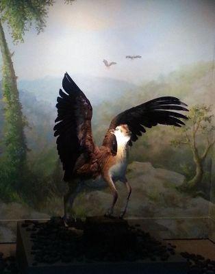 Montagem da série 'Fauna' vista da exposição 'Stranger than fiction', Science Museum, Londres, 2014. Imagem: Reprodução