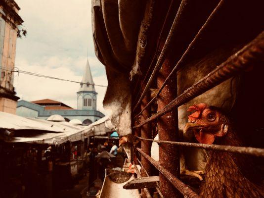 Mercado Ver-o-Peso, Belém do Pará. FOTO NAYARA JINKNSS/DIVULGAÇÃO