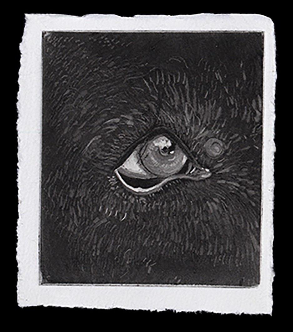 Gravura em preto e branco do olho da cadela 'Gaia'